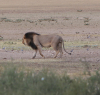 Near Kwang waterhole. We saw different lions at this site (near the water pump, 1.3km from Kwang) on two occassions.