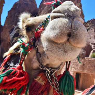 Petra Photo Tours